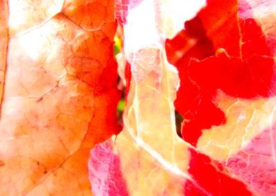 Feuilles d'automne III