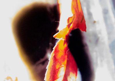 Summer Leaves III