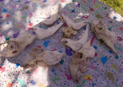 Bones of sculptures drying in the sun I