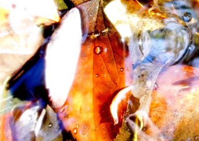 Autumn Leaves X